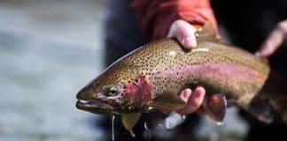 Meth Is Now Impacting Fish