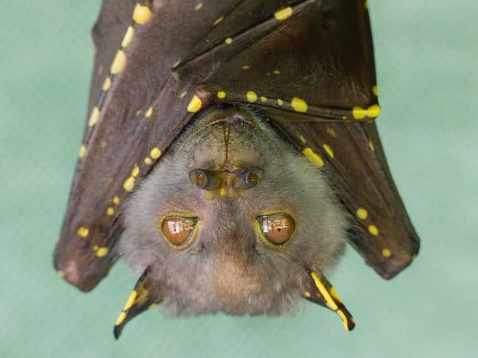 Wuhan Lab Was Allegedly Planning to Release Bats With COVID Into Society in 2018